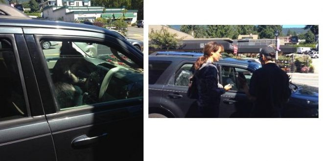 Actress Jennifer Beals confronted after leaving dog in West Vancouver car