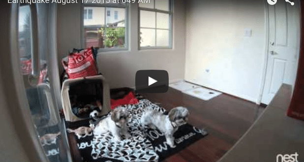 VIDEO Two Dogs around San Francisco React to this Morning's 4.0 Magnitude Earthquake