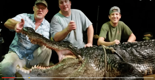 VIDEO 920-Pound Alligator Caught In Lake Eufaula In Southeast Alabama