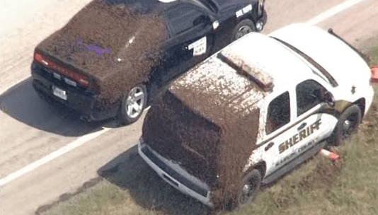 Paul Valley, Oklahoma Truck Carrying Honey Bees Overturns on I-35