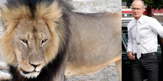 Walter Palmer, American Dentist Who Killed Cecil the Lion, Won't Face Charges in Zimbabwe