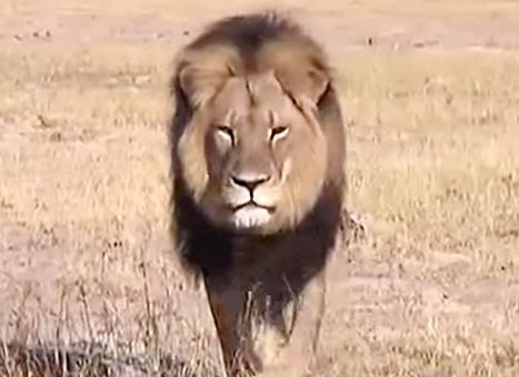 cecil-the-lion-betty-white-lg