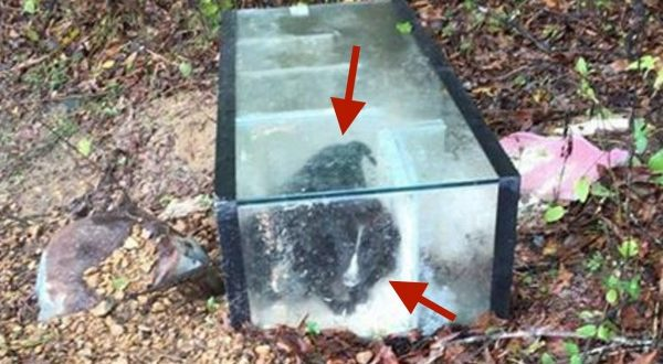 Hinds County, Mississippi: 2 Puppies Found Trapped in Aquarium With Lid Cemented Shut
