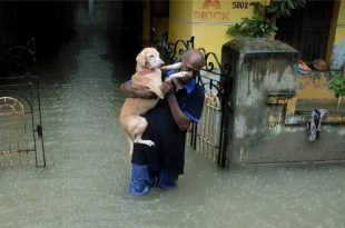 #ChennaiRains: At Least 70 People Killed as Heavy Rainfall Causes Flooding in Indian City