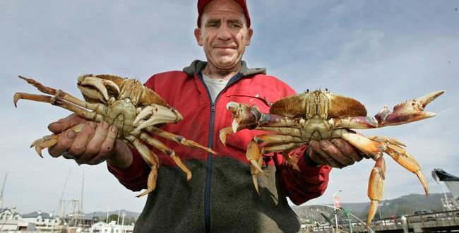 Dungeness Crab: Health Officials Warn Against Eating Crab Caught on California Coast Due to Toxic Algae