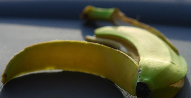 Panama Disease: Bananas is Slowly but Surely Being Driven to Extinction