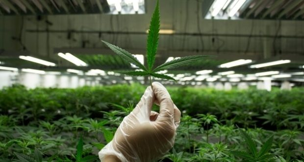 New York Company Vireo Health Soon to Offer First Certified Kosher Marijuana