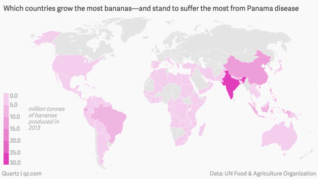 which-countries-grow-the-most-bananas-and-stand-to-suffer-the-most-from-panama-disease_mapbuilder-1