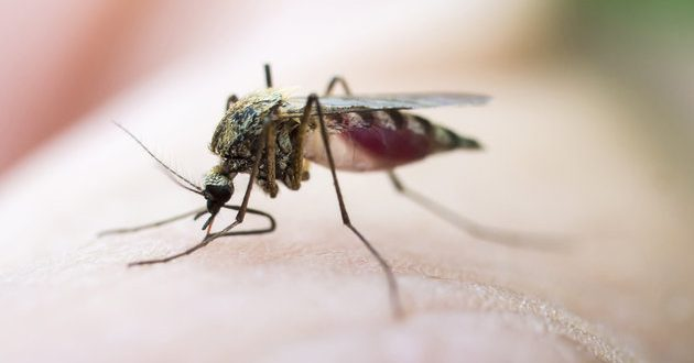 Waipio Valley: Hawaii County Civil Defense Closes Area Due to Outbreak of Dengue Fever