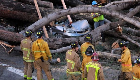1 Dead After Tree Falls Onto To Car in Pacific Beach, San Diego