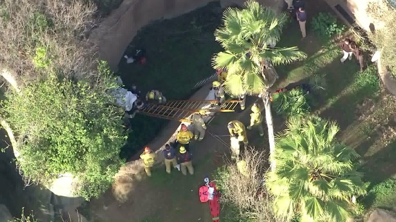 Los Angeles Zoo Worker Hospitalized After Falling Into Gorilla Enclosure