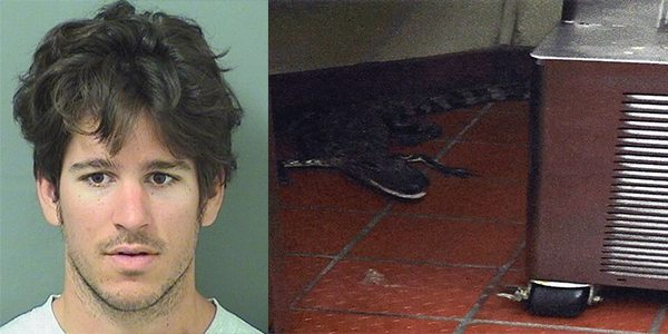 Royal Palm Beach, Florida: Man Arrested for Tossing Alligator into Wendy's