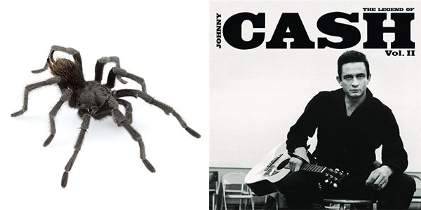 News Species Of Tarantula Named After Music Legend Johnny Cash