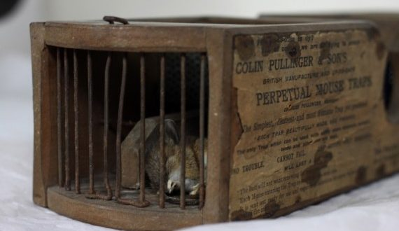 Mouse Killed by 150-Year-Old Mousetrap in Museum of English Rural Life