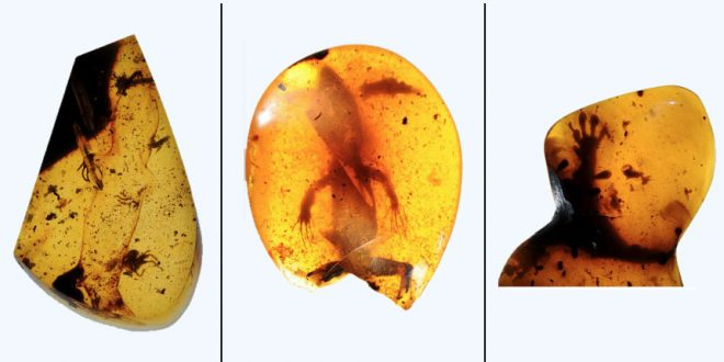 Scientists Discover 99-Million-Year-Old Lizards Preserved in Amber