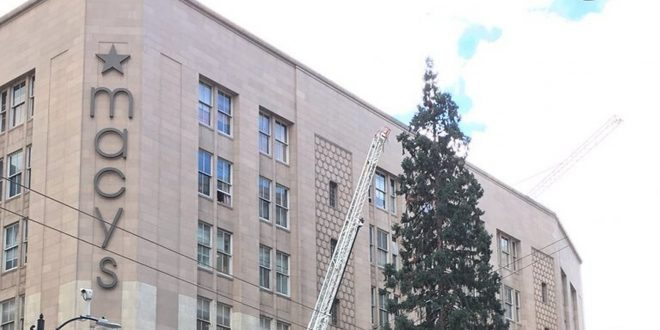 Man Climbs Macy's Christmas Tree Seattle Downtown, Hurls Apple at Medics