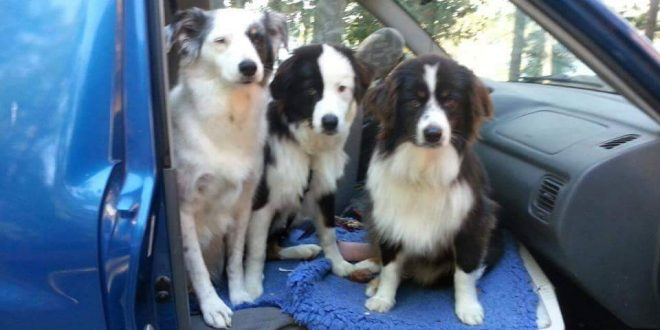 Friday Harbor, Washington: Woman With Terminal Cancer Seeks a Home for Her 3 Dogs