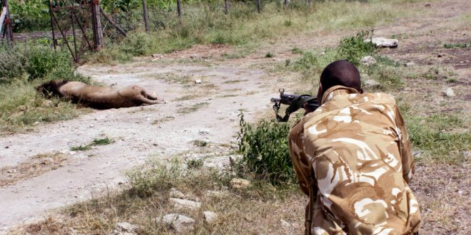 13-Year-Old Mohawk the Lion Killed by Kenya Wildlife Rangers