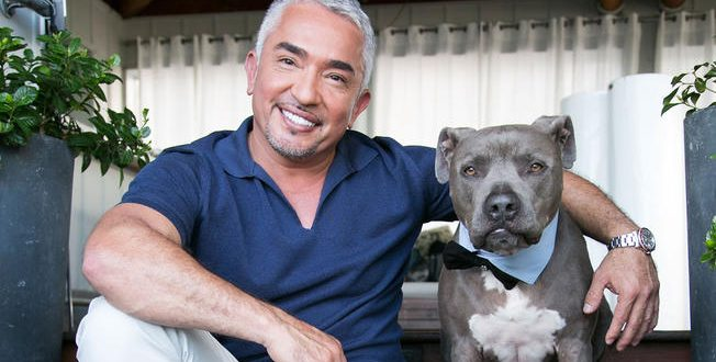 'Dog Whisperer' Cesar Millan investigated For Animal Cruelty