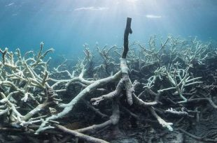 New Images Illustrate Devastating Coral Bleaching in Australia's Great Barrier Reef