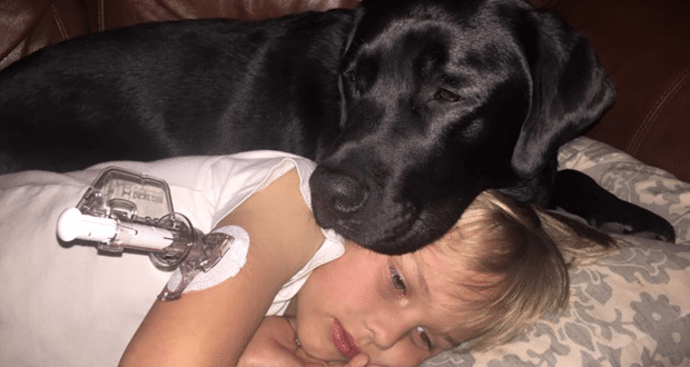 Dog Named 'Jedi' Saves The life of Sleeping Boy with Type 1 Diabetes