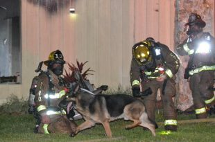 Longwood, Florida: German Shepherd Helped Firefighters Rescue 2 Children From Fire