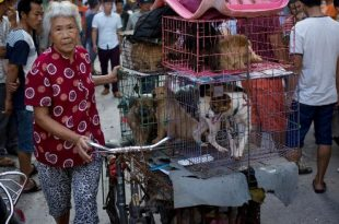 Yulin, China Holds Dog-Meat Eating Festival Despite Protests