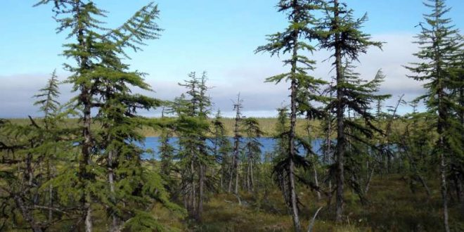 Siberian Larch Forests: Study Shows Vegetation Lags Behind Climate by Several Thousands of Years