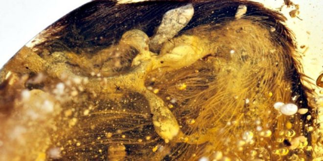 Avian Fossils: 99-Million-Year Old Wings Found Preserved in Amber, Study Says