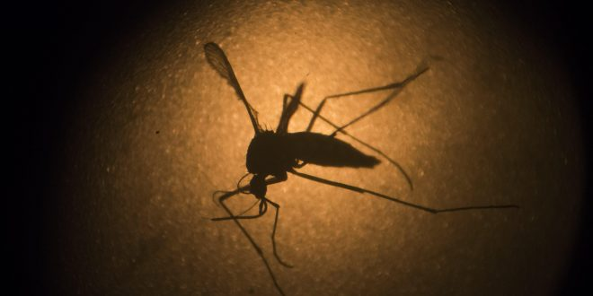 10 More Zika Virus Cases Found in Florida Outbreak; 'Emergency Response' Activated