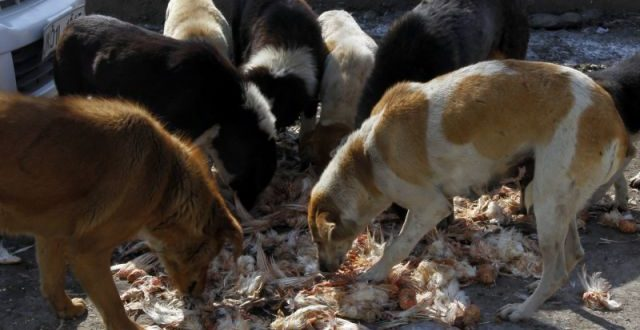 Woman Killed by Pack of Stray Dogs at Beach Near Village in Kerala, India
