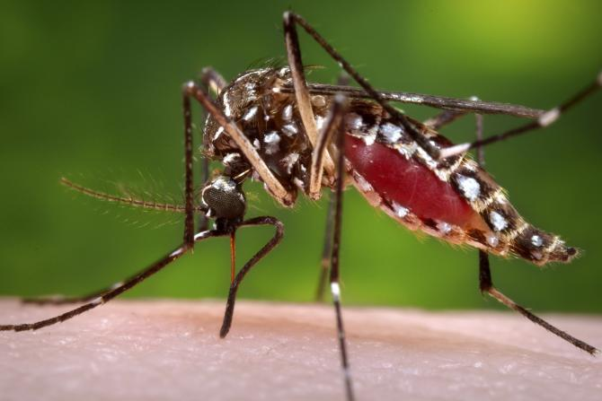Mayor of Hawaii Declares State of Emergency Due to Dengue Fever Outbreak