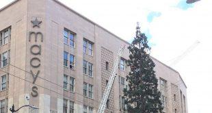 Man Climbs Macy's Christmas Tree Seattle Downtown, Hurls Apple at Medics