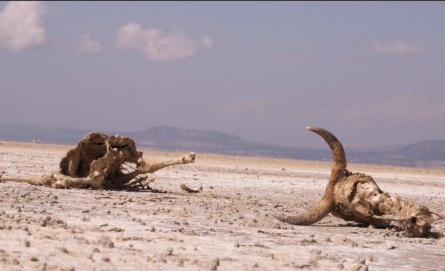 Ethiopia Asks Calls for Aid as Drought Worsens