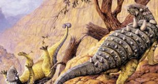 Researchers Say Native Texas Dinosaur Pawpawsaurus Depended on Its Sense of Smell