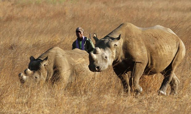 Namibia Accepting Bids From Trophy Hunters to Kill 3 Black Rhinos