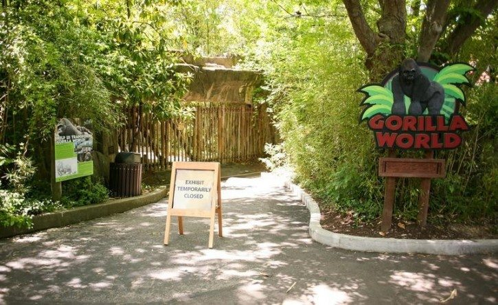 Cincinnati Zoo to Reopen Gorilla World Exhibit Following Incident Involving Toddler