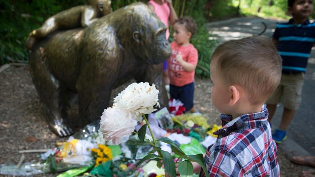 Prosecutor: No Charges Against Mother in Cincinnati Zoo Gorilla Case