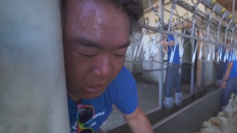 ​Animal Rights Activist 'Almost Dies' After Getting Stuck In Slaughter Processing Line