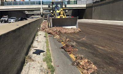 Big Rig Spills Pig Intestines on Kansas City Interstate