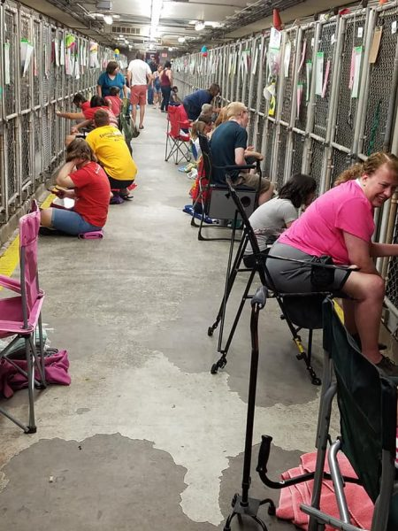 Comforting Shelter Dogs During Fireworks Is The New Independence Day Tradition