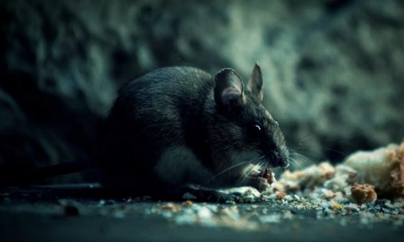 A Case of Hantavirus Has Been Reported in China. Here's Why You Shouldn't Worry.